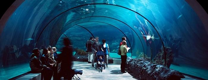 iPlastics Aquariums Applications