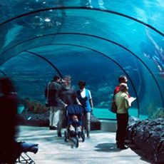 iPlastics Aquariums Applications